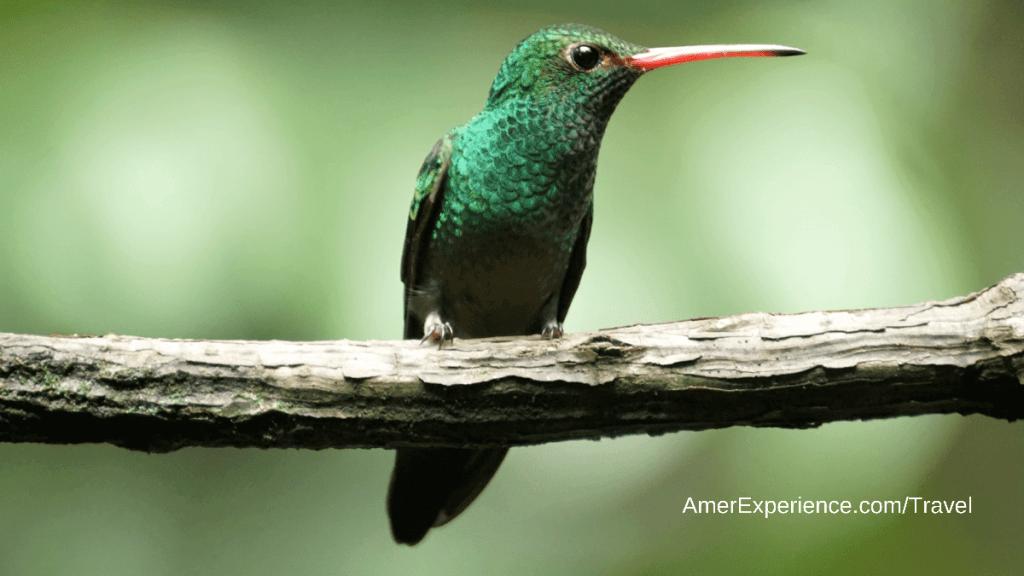 Hummingbird in Mindo Ecuador