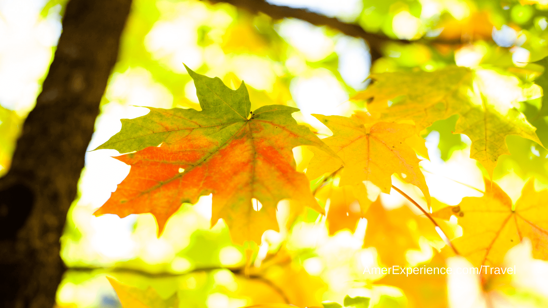 It's fall y'all, time to leaf peep: Your foliage forecast for 2021, according to an expert
