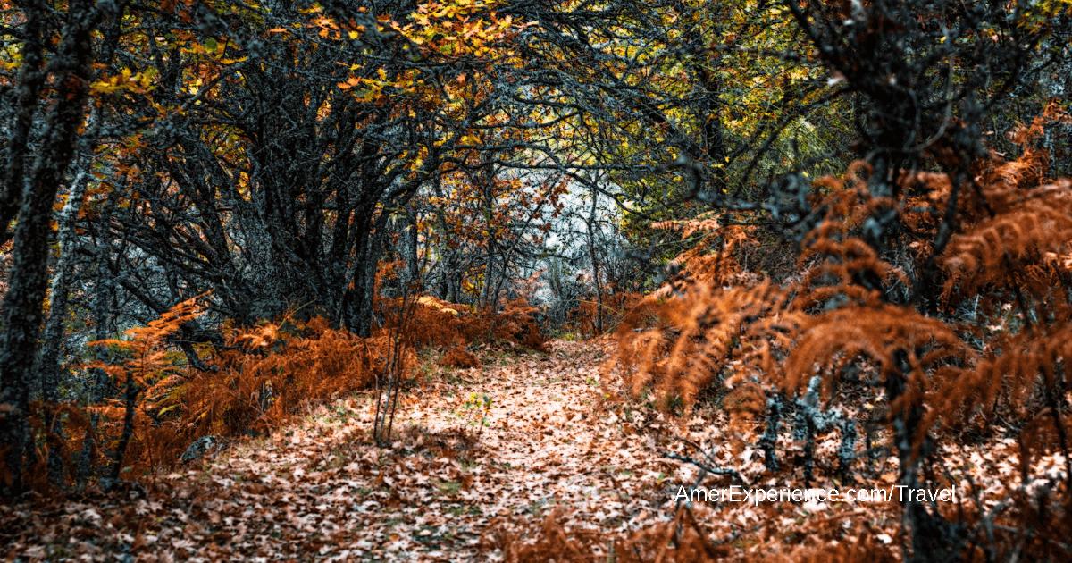 Cinco caminatas diferentes por los bosques más bonitos de Madrid